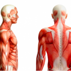 8 Exercises to Improve your Scapula Stability and Shoulder Mobility for Golf
