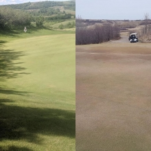 Before & After pic of our greens this summer. July 4th (left) & April 25th (right). Big thanks to our Turf Care team for their hard work this year!